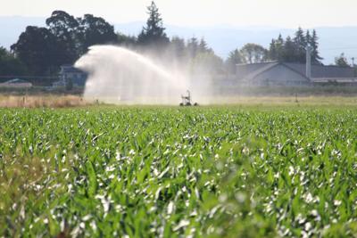FILE —Oregon farm crops