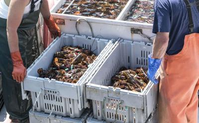 FILE - Lobster industry