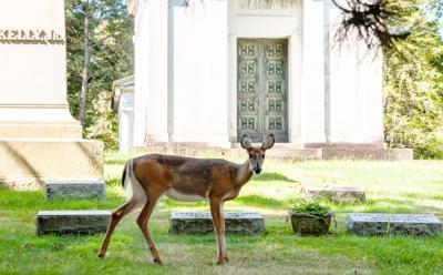 FILE - PA deer 9-7-2019