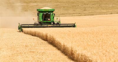 FILE - Wheat farm, agriculture