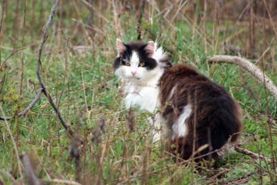 FILE - feral cat