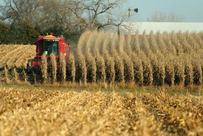 Combine,Harvesting,Corn,,Rural,Nebraska