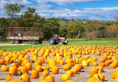 FILE - pumpkin patch, hayride