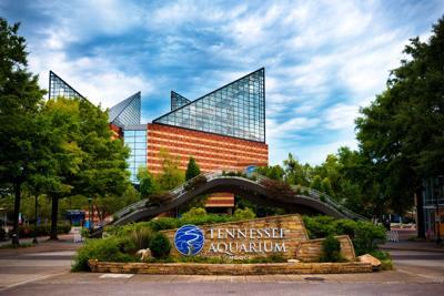 FILE - Tennessee Aquarium