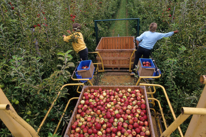 FILE —Washington apple orchard