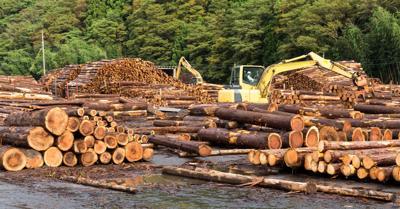 FILE - lumber, timber, wood, trees