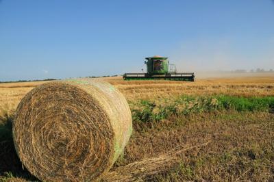 Kansas,Wheat,Harvest