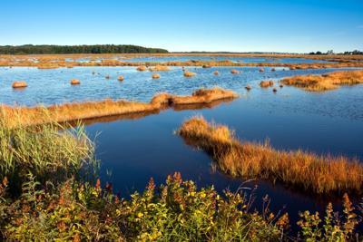 FILE - ME wetland, marsh, Scarnorough