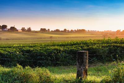 FILE - Iowa soybean farm