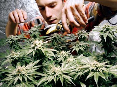 FILE - ME James MacWilliams, marijuana 12-13-2017
