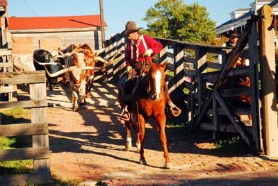 FILE - Texas cowboy longhorns rancher