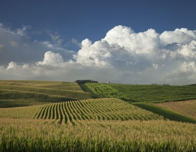 FILE - Minnesota corn soybean farm