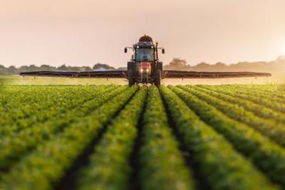 FILE - Soybean farm