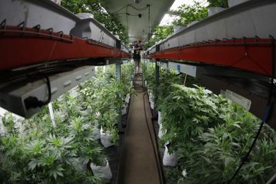 Colorado Marijuana Business