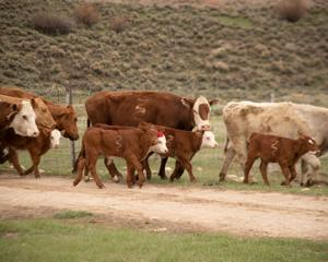 Wyoming rancher sues Biden administration claiming racial discrimination