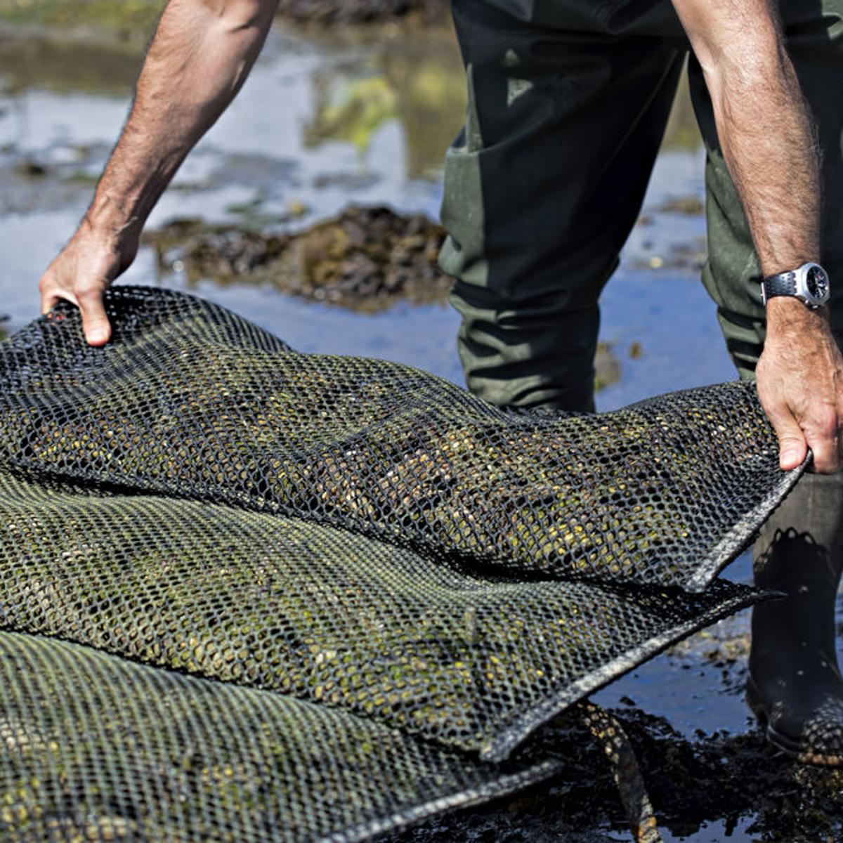 Texas To Start Issuing Oyster Farming Permits For Those Who Are Well Informed It Can Be A Profitable Endeavor Texas Thecentersquare Com