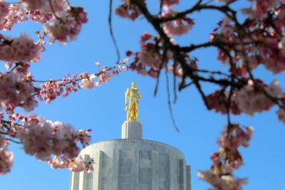 FILE —Oregon state Capitol cherry blossoms