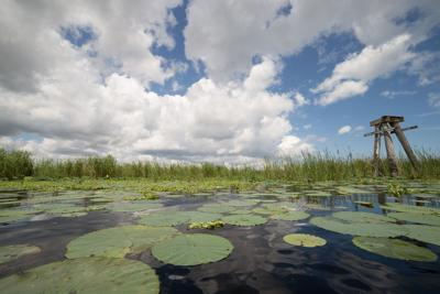 FILE - Lake Okeechobee Florida