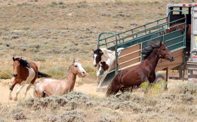 FILE - Wyoming Wild Horses