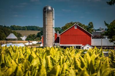 FILE - Pennsylvania tobacco farm