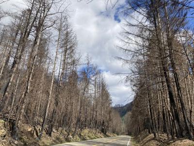 FILE —Oregon wildfire damage