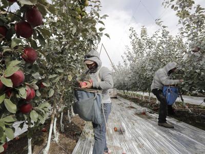 FILE —Washington farm workers
