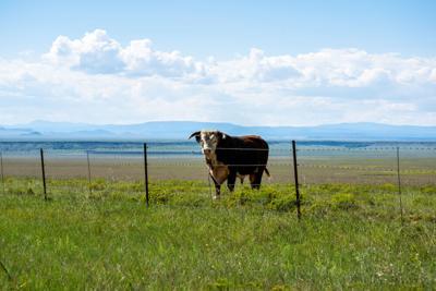 FILE - New Mexico ranch farm