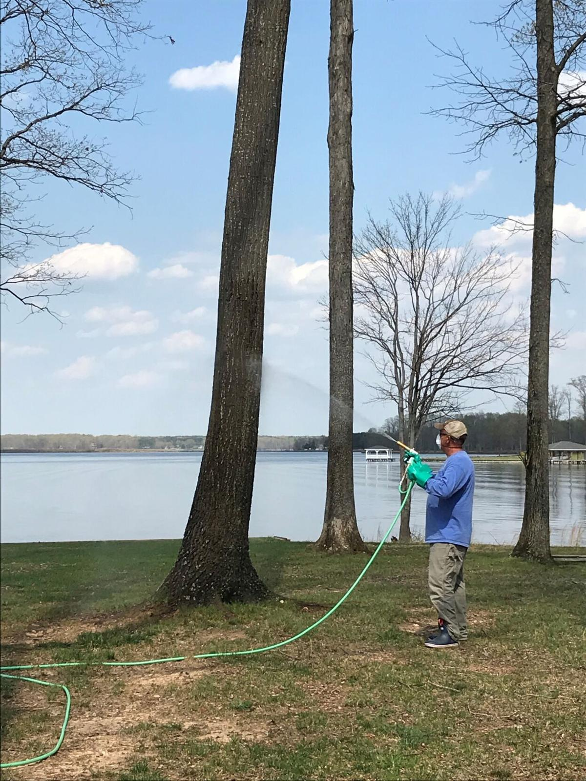 New business at Lake Anna specializes in pruning and plant health care