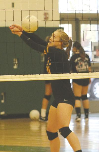 Lions volleyball retakes the court