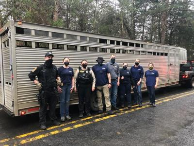Sixteen dogs taken from Louisa County property