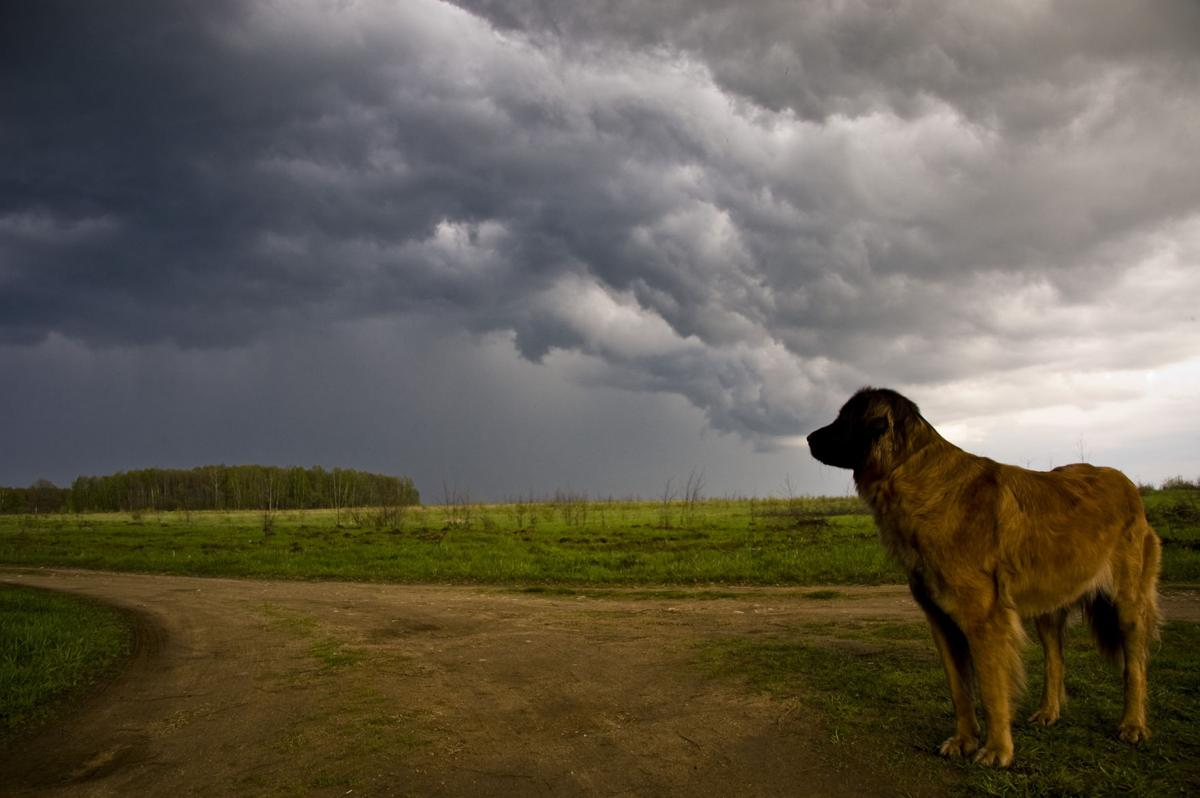 Thunderstorm-Phobia-in-Pets.jpg