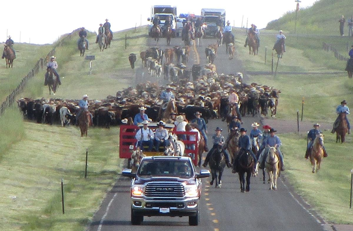 Lets Rodeo Cattle Drive.jpg