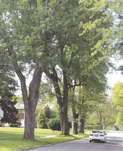 Clarion council talks trees and lawnmowers