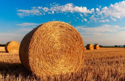 Farm Service Agency now accepting nominations for County Committee Members