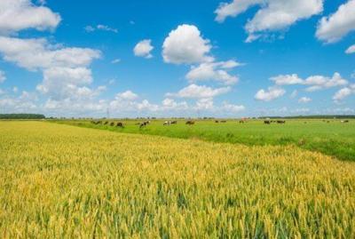Is carbon your next new crop?