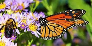 Save our pollinators, save our world