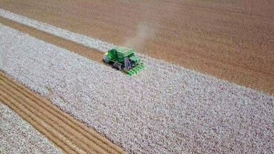 Fertilizer considerations for cotton should be revised
