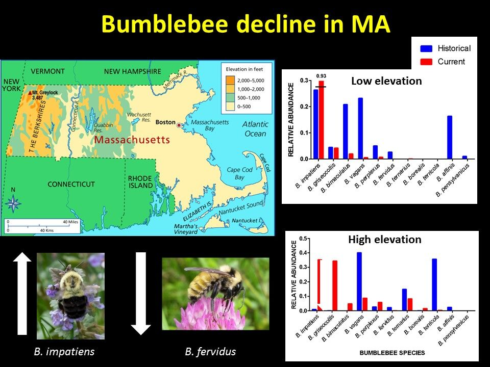 Bees In Decline Slide