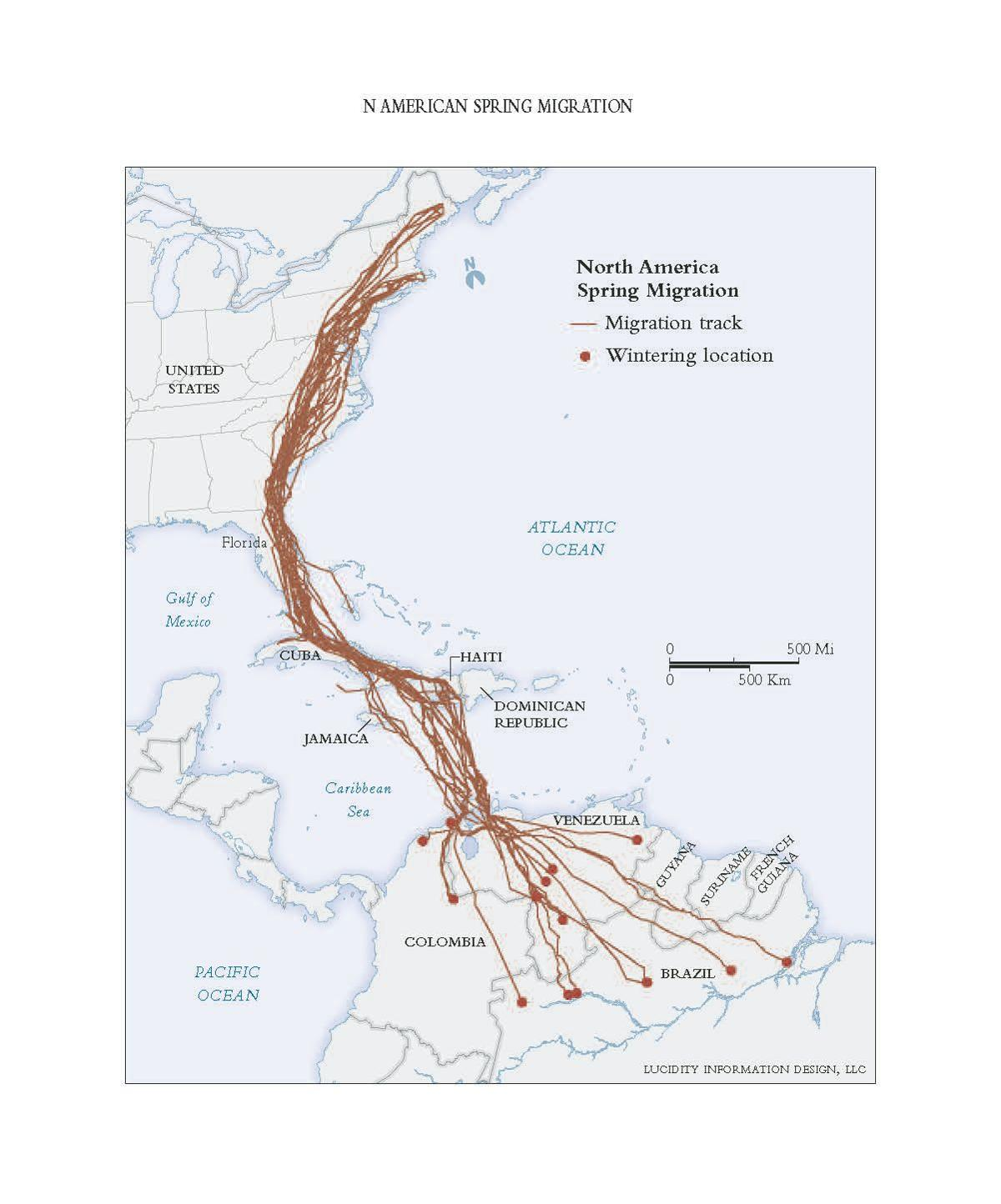 Osprey Migration Map