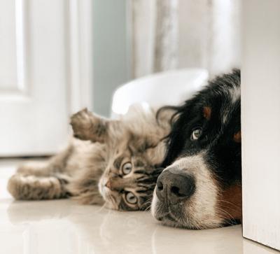 Dog and Cat in Doorway