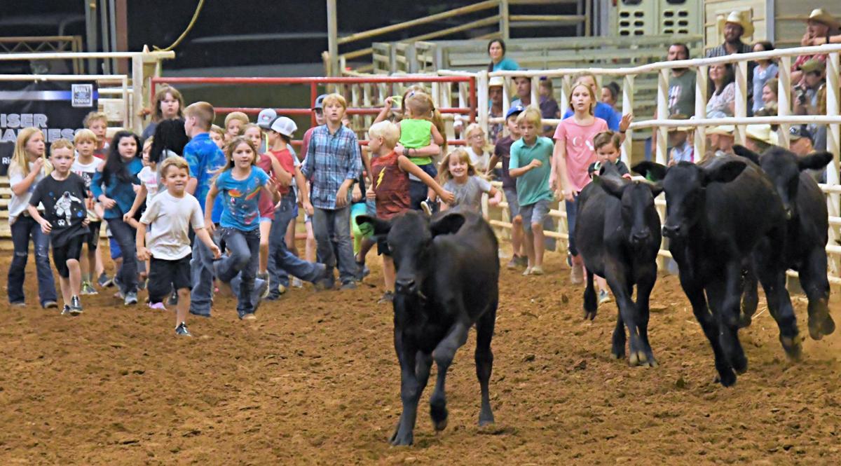 Chasing calves