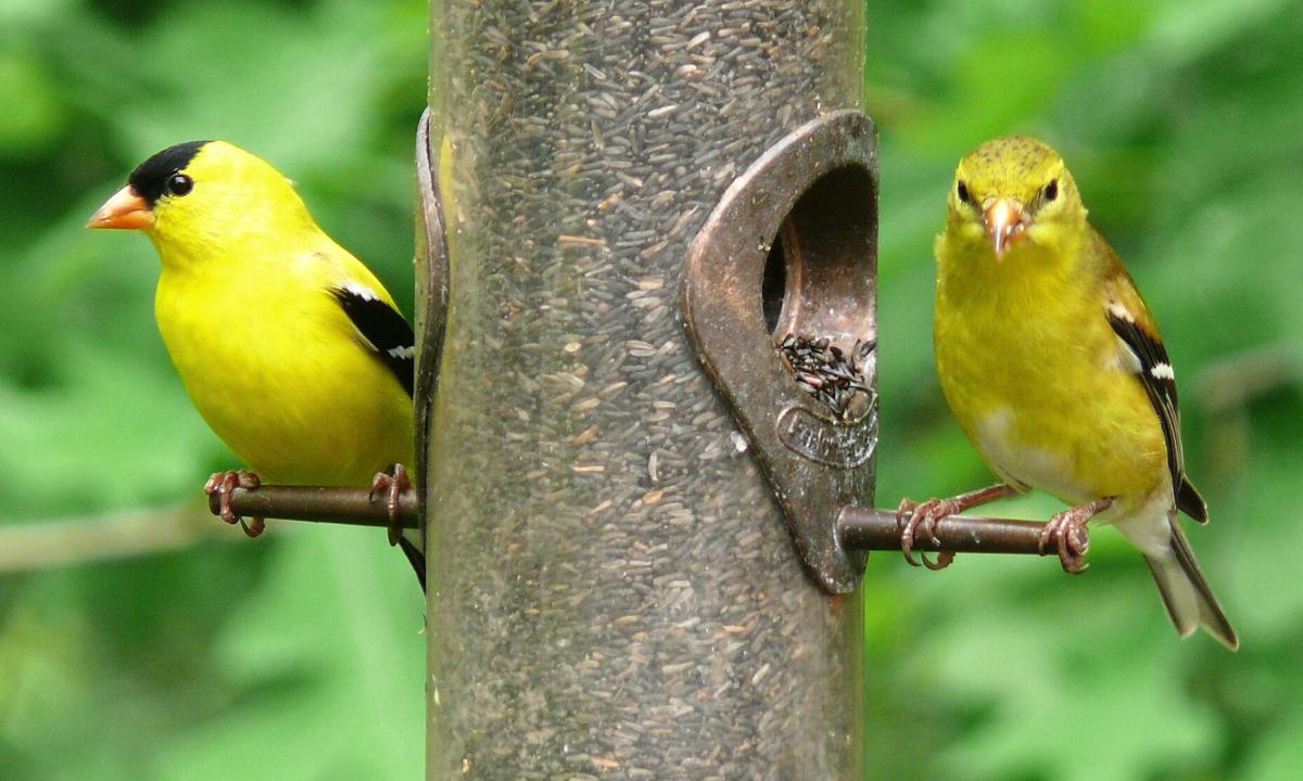 Join me for a bird & nature walk