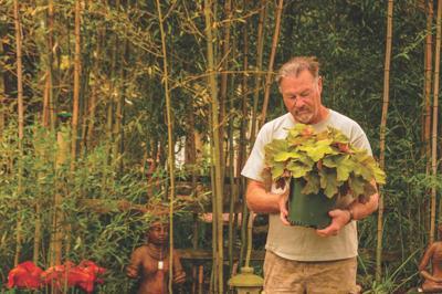 Recognize garden diseases to properly treat plants