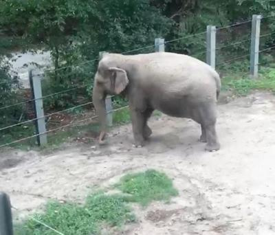 The elephant in the room: does Happy qualify for habeas corpus?