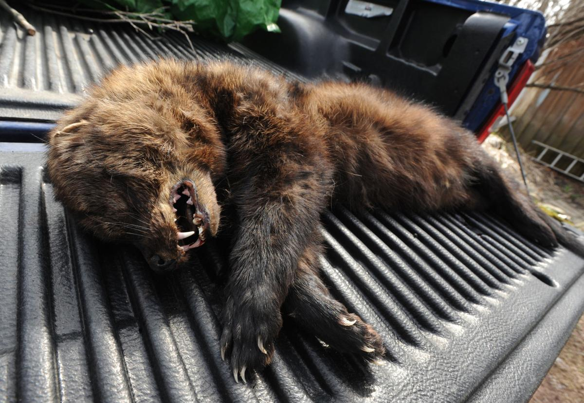 50++ What to do if you encounter a fisher cat ideas in 2021