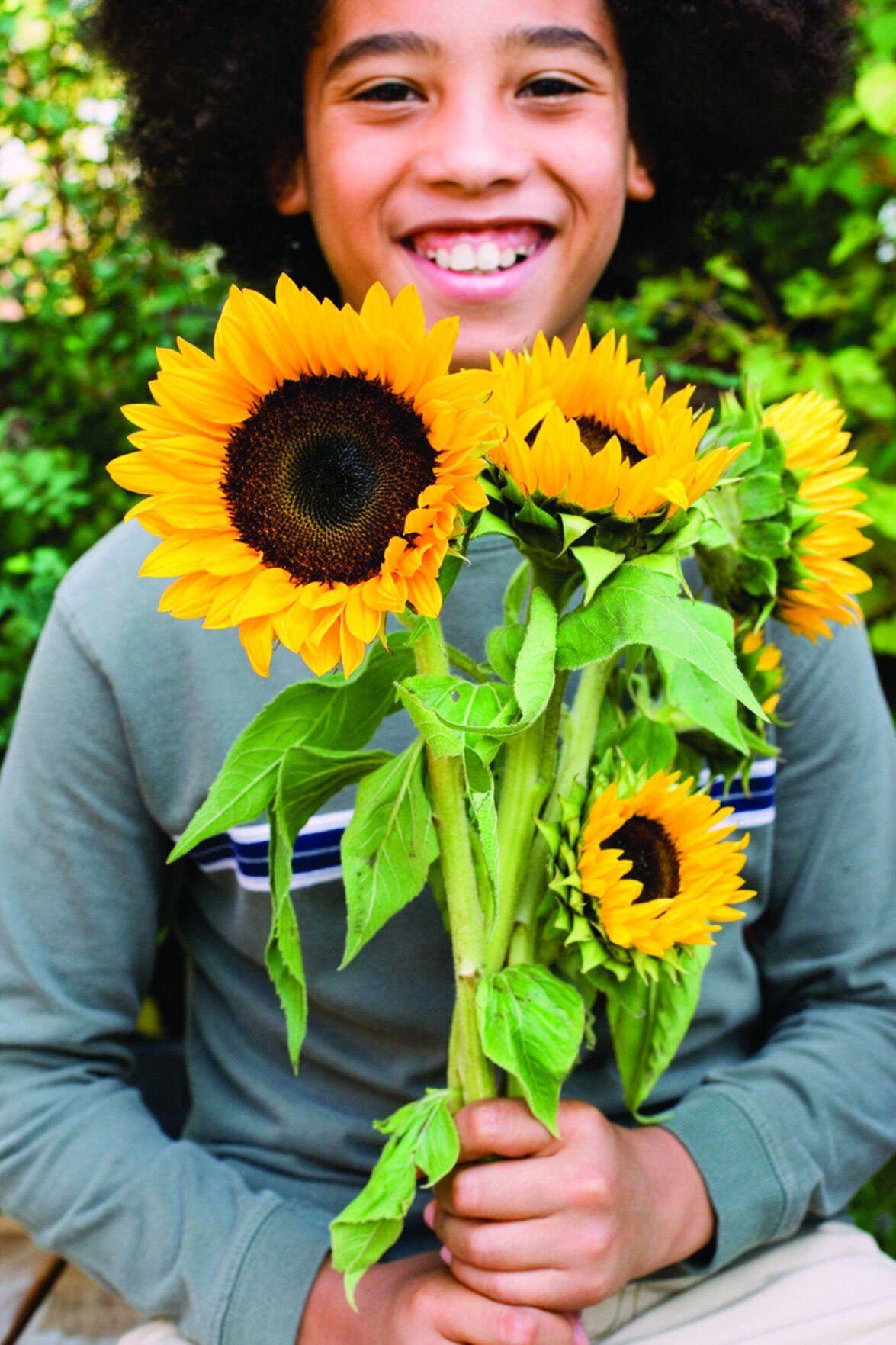 The art of growing sunflowers