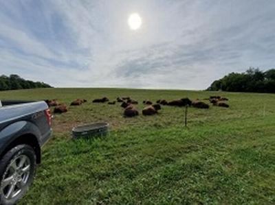 Pasture walk planned at Mount Morris farm