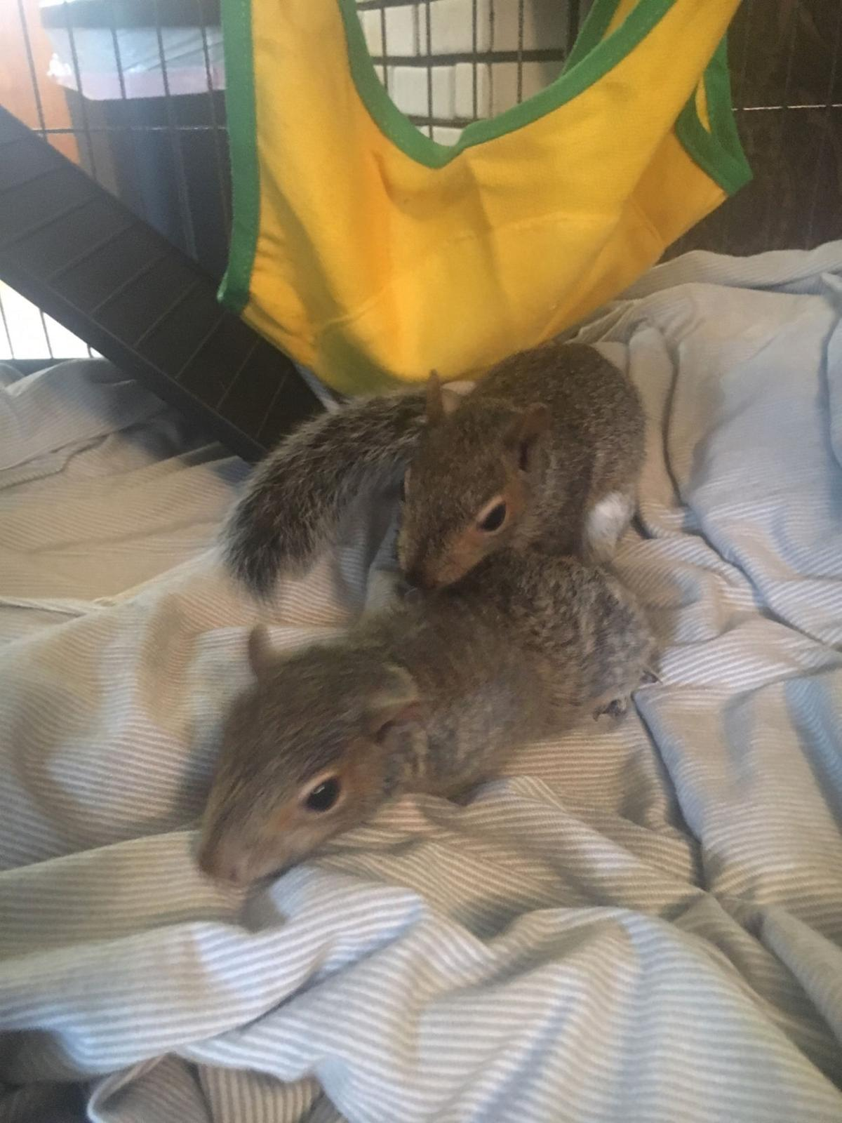 Coco and Peanut; a tail, er, tale of two squirrels