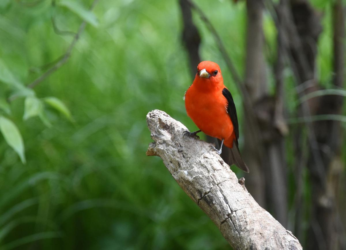 Birds to be found everywhere in June