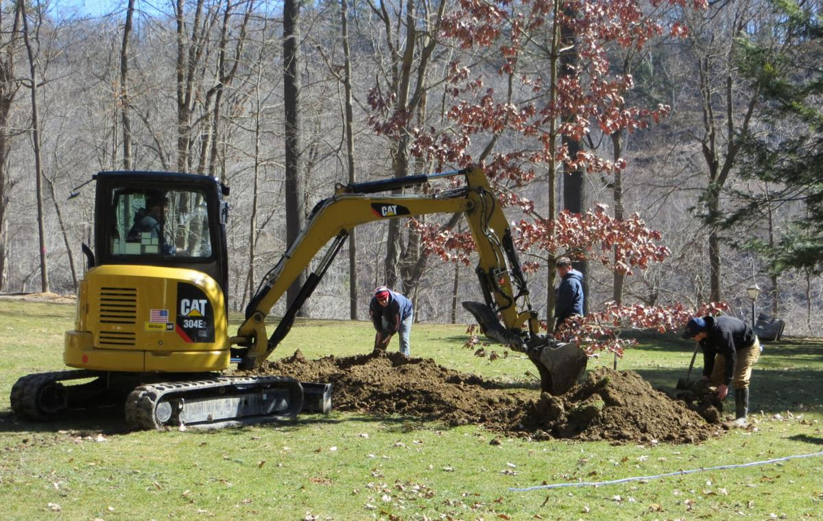Historic oak returns at park